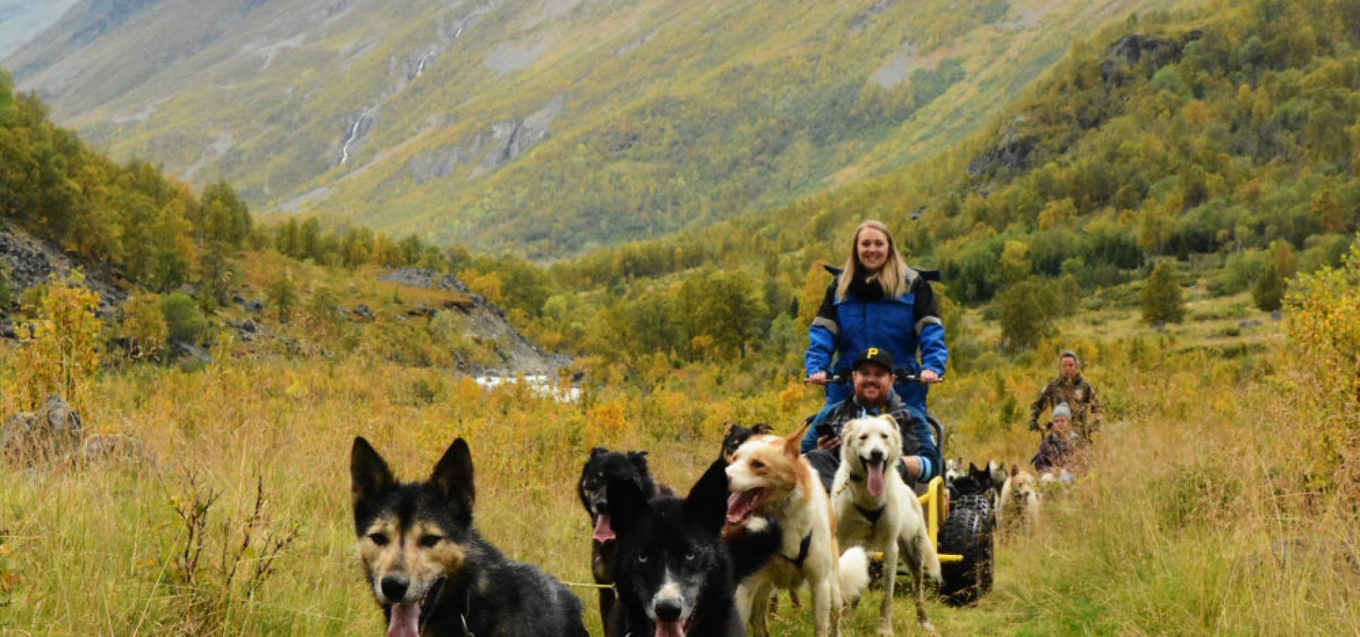 Dogsledding on wheels on a autumns day