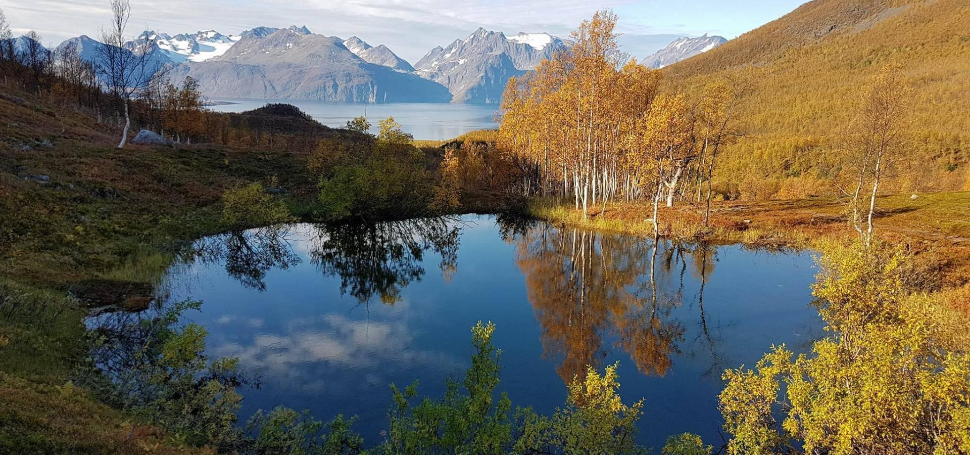 Small lake surrounded by autumn colours, the Lyngenfjord and Lyngen Alps in the background