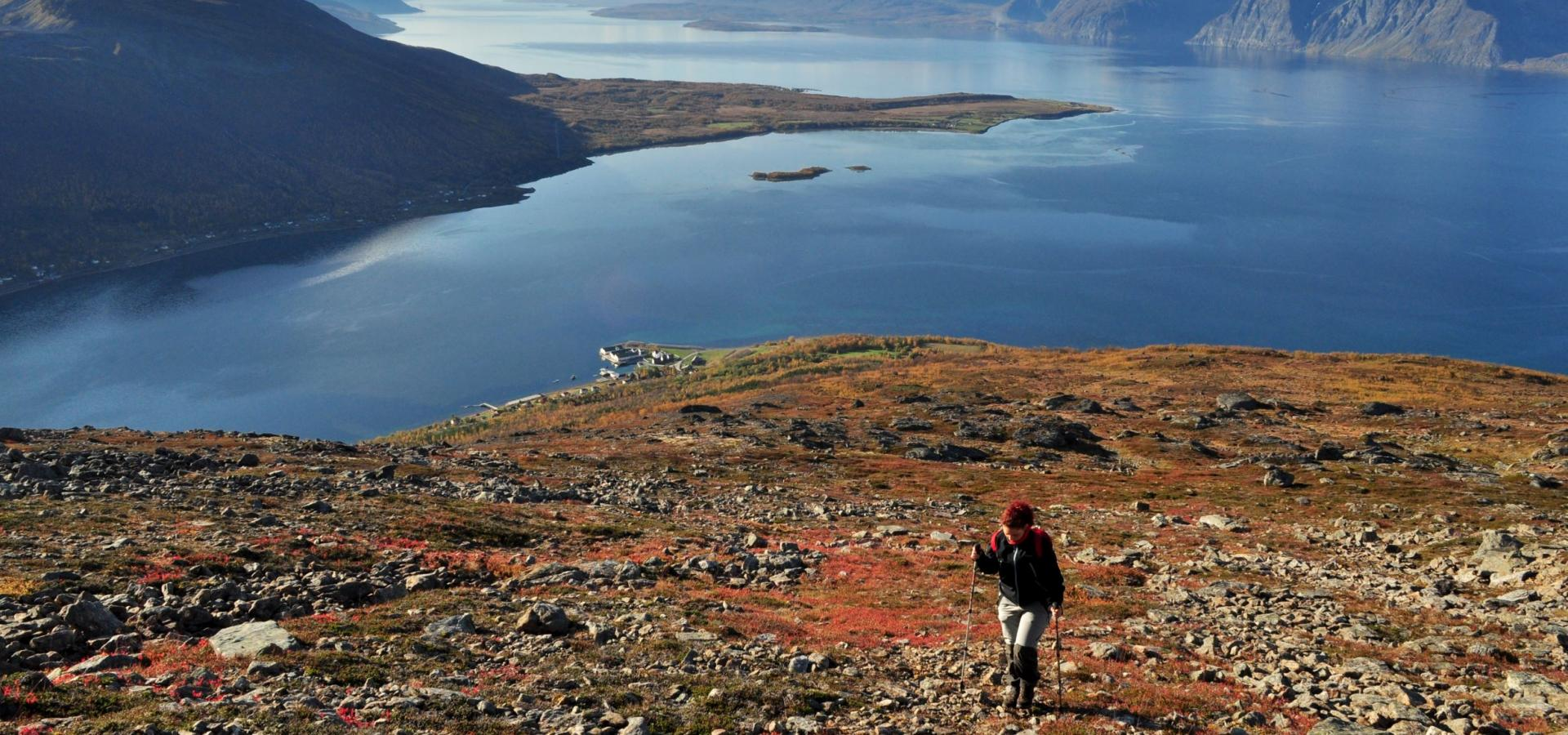 Hiker on the way up Uløytinden in autumn colors, the Lyngenfjord and mountains in the background