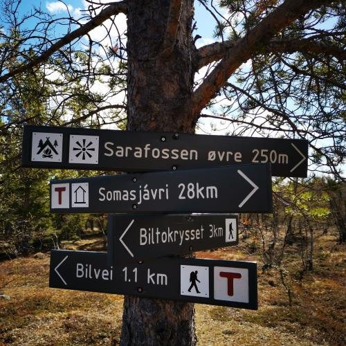 A tree with four green hiking signs