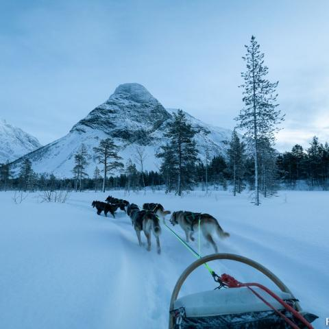 Dogsledding Riverland Husky, Reisadalen, Northern Norway