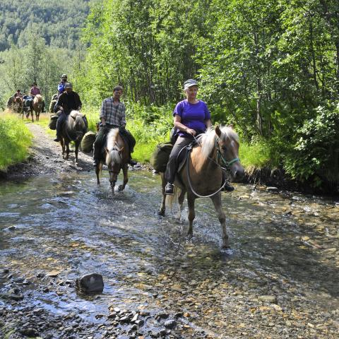 Several horses, with riders, in a row crossing a river on a sunny day