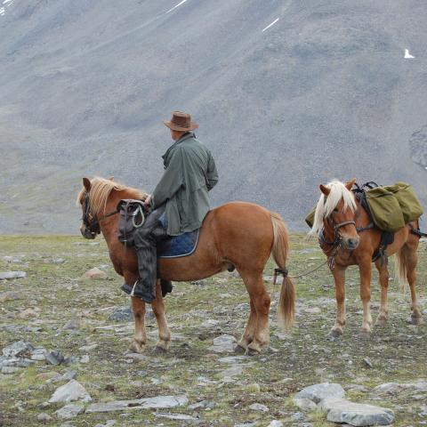 A rider on a Lyngen horse in the mountains with a pack horse